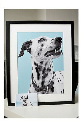 FRAMED Customised PORTRAIT of your pet. Size Large. ANY colour background.