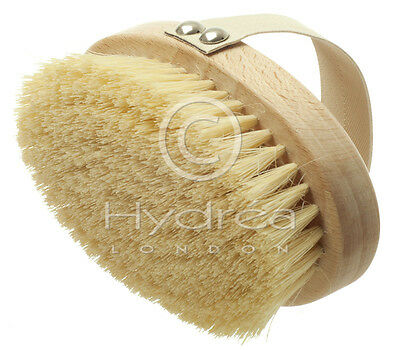 Hard Body Brush for Dry Skin Brushing - Exfoliating & Cellulite Reducing, Hydrea
