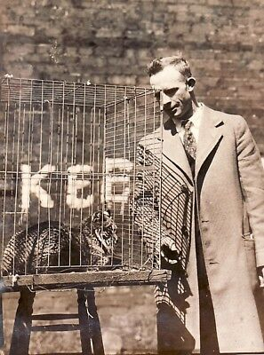 Pet Wildcat in cage & Owner Wrinkle Chat sauvage Washington old Photo 1920's