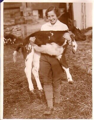 England Calf Farm Girl Animated Jeune femme portant un veau large old Photo 1932