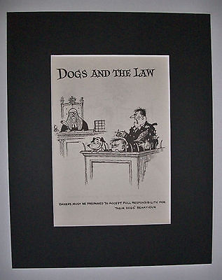 Dog Cartoon Print Norman Thelwell Court Appearance Bookplate 1964 8x10 Matted