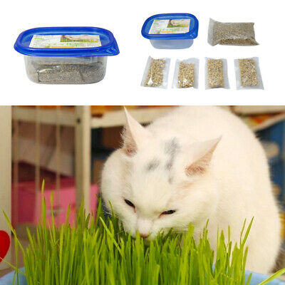 Healthy Cat Snack Foliage Plant Seed Wheat Grass Green Safety Organic Grass 150g