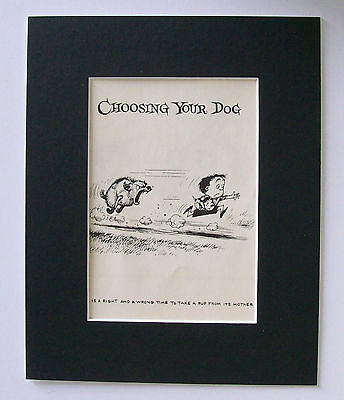 Dog Child Cartoon Print Norman Thelwell Choosing A Puppy Bookplate 1964 Matted