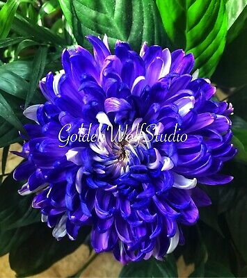 Digital Photo Picture Image - Bloom Bright 7 - Free Shipping