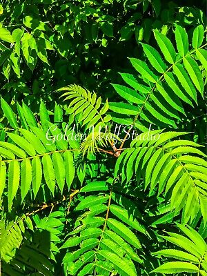 Digital Photo Picture Image - Going Green - Free Shipping