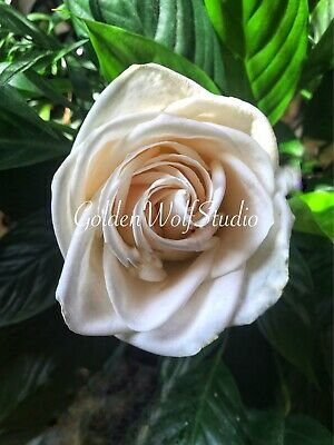 Digital Photo Picture Image - Bloom Bright 4 - Free Shipping