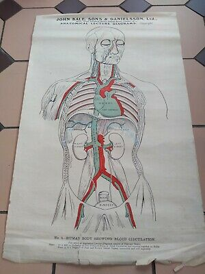 Anatomical  Human body Diagram Poster  J Bale, Sons Framed Antique 1915 Original