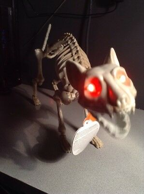 Halloween Skeleton Cat Animated Moving Jaw Sound Eyes Light Up Decoration Prop