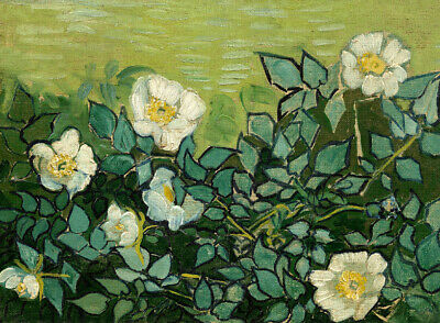 Wild rose by Vincent van Gogh Oil painting art Giclee printed on canvas L2403