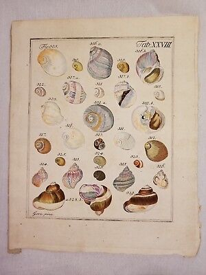 Original 1831 Hand Colored Print Neues Systematisches Conchylien-Cabinet Shells