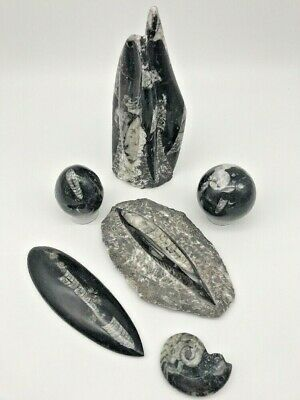 """Orthocers Fossil Collection """"400 MIL YEAR OLD"""" (Tower, Plate, Egg, Sphere, etc.)"""