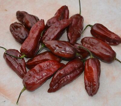Chocolate Naga Brain Pepper Seeds + FREE Bonus 6 Variety Seed Pack - a $30 Value
