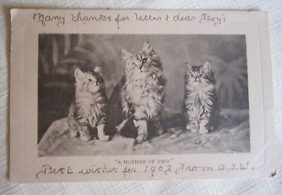 CATS KITTENS SUPERB VINTAGE POSTCARD~A Mother Of Two