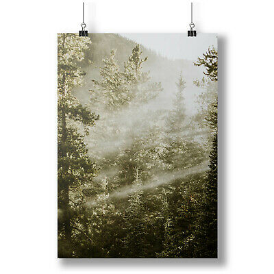 Beautiful forest with in bright sunlight A0 A1 A2 A3 A4 Photo Poster a4346h