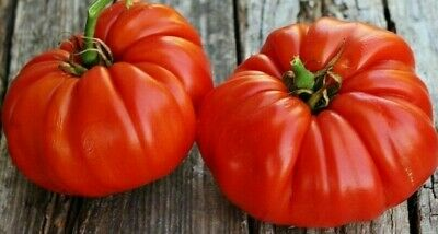 20 'Brutus' GIANT Tomato Heirloom Seeds - up to 2 kg each Fruit! Delicious Tasty