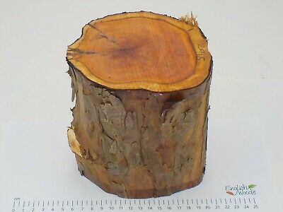 English Yew wood turning or carving log blank.  120-140 x 150mm.  2915
