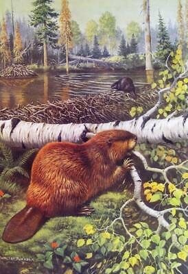Beavers Building Home by  Stream by Walter Weber