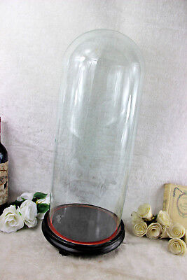 French round hand blown Antique Dome globe glass taxidermy clock wood base