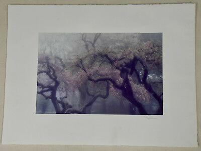 Spring Blossoms CT 1984 Vintage Signed Robert Farber Agfa Limited Edition Print