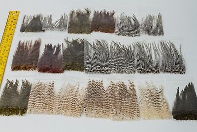 Grizzly Dry Fly Neck Hackle Mini Packs - 20 PACKS!