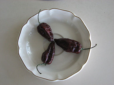 Chocolate Ghost Pepper Seeds(Naga Jolokia, Bhut Jolokia) 29 SEEDS