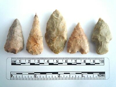 5 x Native American Arrowheads found in Texas, dating from approx 1000BC  (2241)