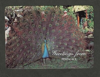 e2915)   MURRAY VIEWS POSTCARD - THE PEACOCK - NATIVE TO INDIA & SRI LANKA