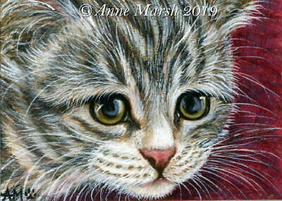 ACEO Original Watercolour Painting Tabby Kitten Cat Inquisitive Anne Marsh Art