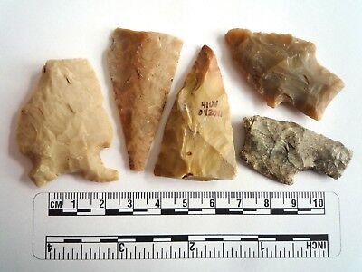Native American Arrowheads found in Texas x 5, dating from approx 1000BC  (2281)