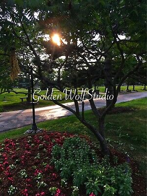 Digital Photo Picture Image - Garden Vignette - Free Shipping