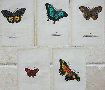 Set of 5 small antique colour wood engravings of butterflies, Early 19th Century