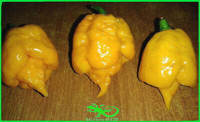 20 Semi Peperoncino Carolina Reaper Yellow 20 Seeds Hot Pepper Carolina Yellow