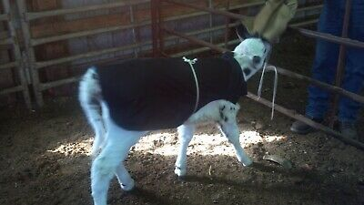 Beef Cattle-New Item Out - Baby Calf Saver Coat Blanket 50-70 lb