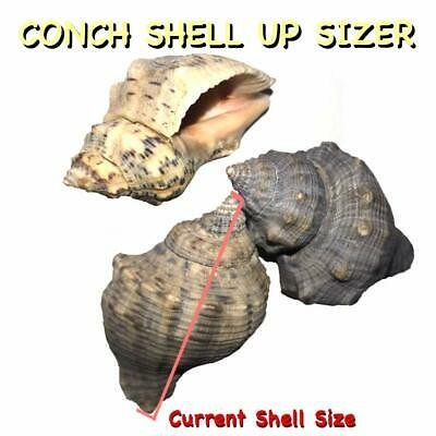 The Other Tide Hermit Crab Changing Shells - Medium Shell Up-Sizing Package - Co