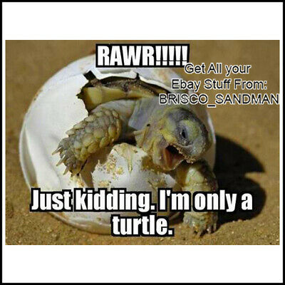 "Fridge Fun Refrigerator Magnet ""RAWR! JUST KIDDING I'M ONLY A TURTLE"" Funny Meme"