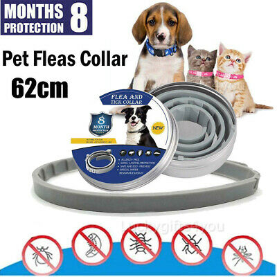 62cm Flea and Tick Collar Anti Insect for Small Pet Dog Cat 8 Month Protection