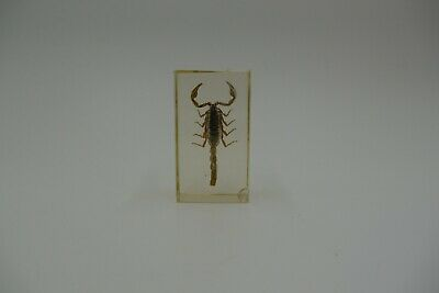 DeAgostini Encased REAL BUG Bugs Insects NEW in PACK w// Collector Card M3D