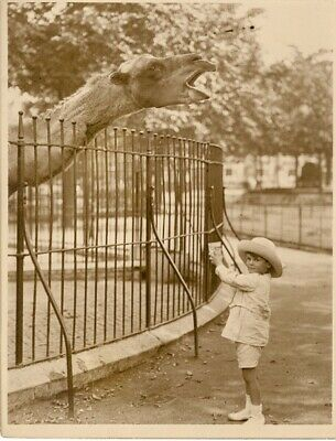 Little boy offering a glass thirsty camel Chameau assoiffé Zoo old Photo 1920's