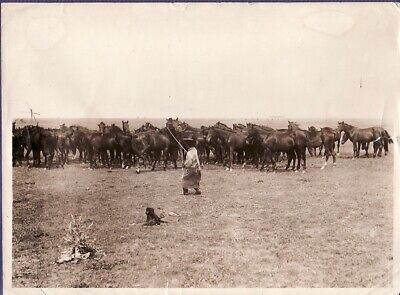 Hungarian Plain Putza Cowboy Horses Hongrie Hungary chevaux old Photo 1920's