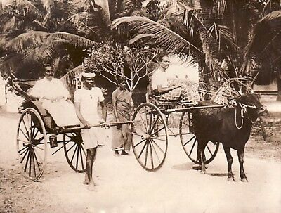 Rickshaw Champion contre ox Bullock Ceylon Colombo Ceylan old Photo 1920's