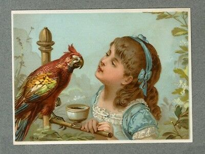 Grand Chromo Fillette & Perroquet Girl & Parrot Large Victorian Card