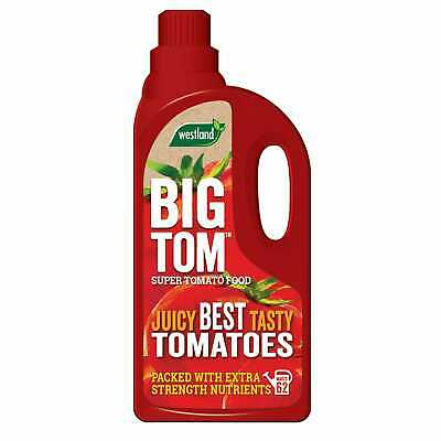 Big Tom Super tomate comida