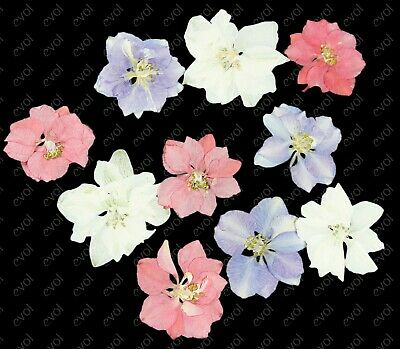 """12 Real """"Consolida"""" Pressed Flower Resin Embellishments Craft Festival Make Up"""