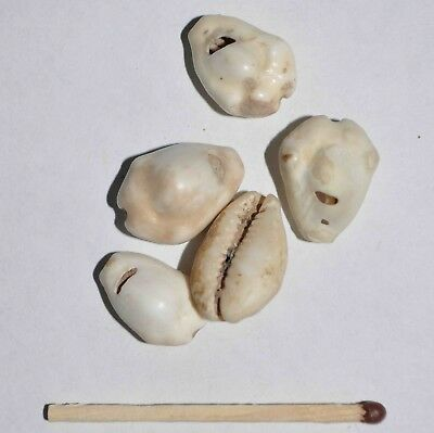 (9125) Lot of 5 Cowry shell money from Silk Road, Samarqand Soghd.