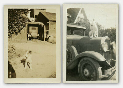 1934 Pair of (2) Vintage Photos WIRE HAIR FOX TERRIER PUPPY & Tough Dog on Car
