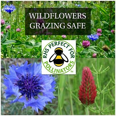 WILD FLOWER BUTTERFLY /& BEE MEADOW MIX 50//50-5g Fairy Flower Seeds