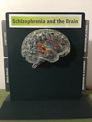 Medical Model Schizophrenia And The Brain Plastic Demonstration Desk Explain