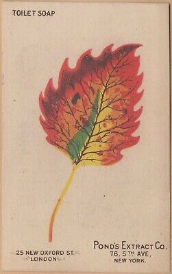 Victorian Trade Card-Pond's Extract-New York-Patent Medicine-Colorful Leaf
