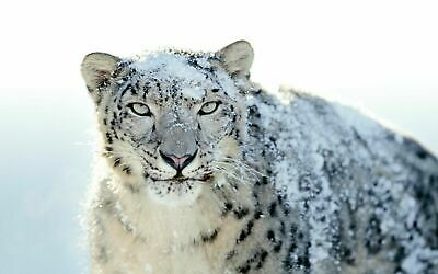 Apple Mac  OS X Snow Leopard 10.6 Bootable installer install Recovery USB Drive