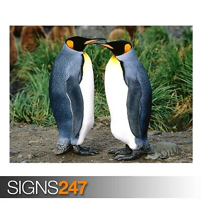 3556 ARCTIC PENGUINS PAIR Animal Poster Photo Poster Print Art * All Sizes